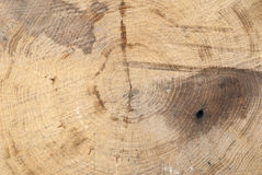 Fresh cut deciduous trees with growth rings, texture, signs Royalty Free Stock Images