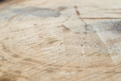Fresh cut deciduous trees with growth rings, texture, signs Stock Images