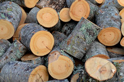 Fresh cut of a fire wood logs stock image