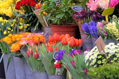Fresh Cut Flower in Paris Stock Photo