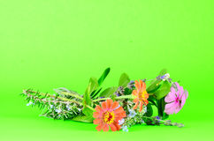 Fresh Cut Flowers Stock Images