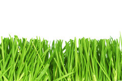 Fresh cut grass Stock Photography