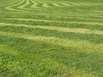 Fresh cut green grass Stock Photos