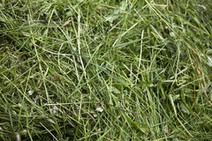 Fresh cut green grass texture Royalty Free Stock Photography
