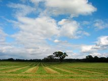 Fresh Cut Hay Royalty Free Stock Photos
