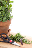 Fresh Cut Herbs Stock Photo