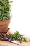 Fresh Cut Herbs Stock Photo