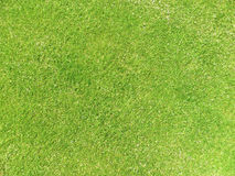 Fresh cut lawn. Section of newly cut grass for backgrounds and fills Stock Images