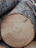 Fresh cut log, close up royalty free stock photography