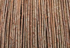 Fresh cut logs Stock Photo