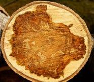 Fresh cut logs Royalty Free Stock Photography