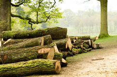 Fresh cut logs in forest setting Stock Photos