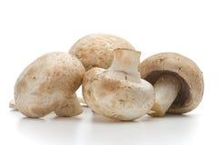 Fresh-cut mushrooms champignon. Over white background royalty free stock image