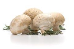 Fresh-cut mushrooms champignon. Over white background royalty free stock photos