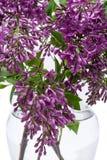 Fresh cut Purple Lilac Flowers in clear glass vase on white. Syringa vulgaris. Fresh cut Purple Lilac Flowers in clear glass vase on white background. Syringa stock photos