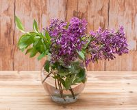 Fresh cut Purple Lilac Flowers in clear glass vase on wood. Syringa vulgaris. Fresh cut Purple Lilac Flowers in clear glass vase on wooden background. Syringa stock photos