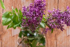 Fresh cut Purple Lilac Flowers in clear glass vase on wood. Syringa vulgaris. Fresh cut Purple Lilac Flowers in clear glass vase on wooden background. Syringa stock images