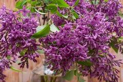 Fresh cut Purple Lilac Flowers in clear glass vase on wood. Syringa vulgaris. Fresh cut Purple Lilac Flowers in clear glass vase on wooden background. Syringa royalty free stock image