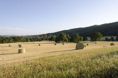 Fresh Cut Rolls of Hay in Western Field Royalty Free Stock Images