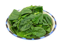 Fresh Cut Spinach Leaves In Bowl Angle View Stock Image