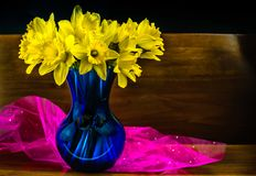 Fresh cut spring daffodils presented on reclaimed hardwood background. First of the spring fresh cut yellow daffodils in a blue crystal glass vase presented on Royalty Free Stock Photos