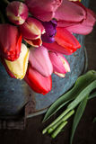 Fresh cut spring tulips Stock Images