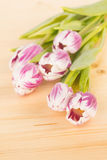 Fresh cut spring tulips Royalty Free Stock Images