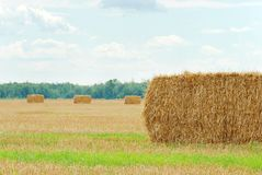 Fresh cut straw in a field Stock Photography