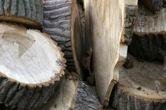 Fresh cut tree logs. A pile of freshly cut tree log discs of softwood Stock Images