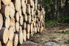 Fresh cut tree logs in the forest. Fresh cut tree logs in the pine forest Royalty Free Stock Photography