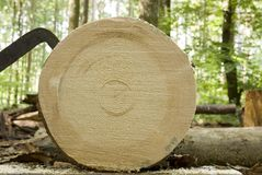 Free Fresh Cut Tree Trunk In Forest, Lumber Work Royalty Free Stock Images - 103661899