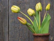 Fresh cut tulips Royalty Free Stock Photo