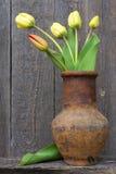 Fresh cut tulips Stock Photo