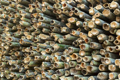 Fresh cut up green bamboo Royalty Free Stock Photography