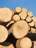 Fresh cut wood Royalty Free Stock Photos