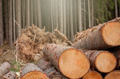Fresh cut wood in the forest - Germany stock images