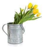 Fresh cut yellow tulips Stock Photo