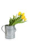 Fresh cut yellow tulips Royalty Free Stock Photo