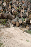 Fresh cutted firewood Royalty Free Stock Image