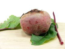 Fresh cutting Chioggia beets. Raw and fresh Chioggia beets Stock Photos