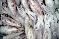 Fresh cuttlefish Stock Images