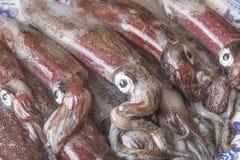 Fresh cuttlefish closeup stock images