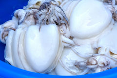 Fresh Cuttlefish, Closeup Stock Image