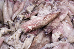 Fresh Cuttlefish In The Market Royalty Free Stock Photography