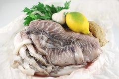 Fresh Cuttlefish Royalty Free Stock Image