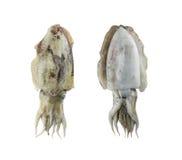 Fresh cuttlefish (Sepia) isolated on white background. Stock Photos