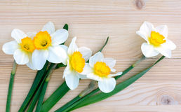Fresh daffodils or narcissus  flowers on wooden background. Fresh daffodils flowers on wooden background Royalty Free Stock Photo