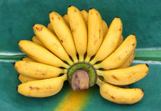 Fresh dainty bananas on a banana leaf. Bunch of Fresh dainty bananas on a banana leaf, wooden tray stock photos