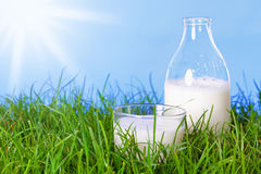 Fresh dairy milk in glass and bottle Stock Images