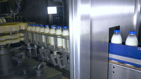 Fresh dairy products, bottles moving on a conveyor. Milk products plant.
